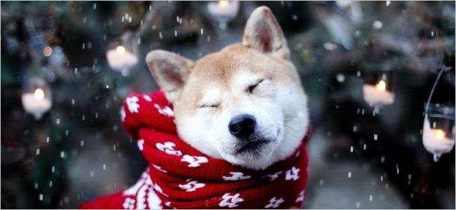 مجموعه تصاویر کریسمس در سال 2013 (20 تصویر)